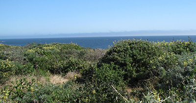 View of Pacific Ocean from site at Bodega Bay, California
