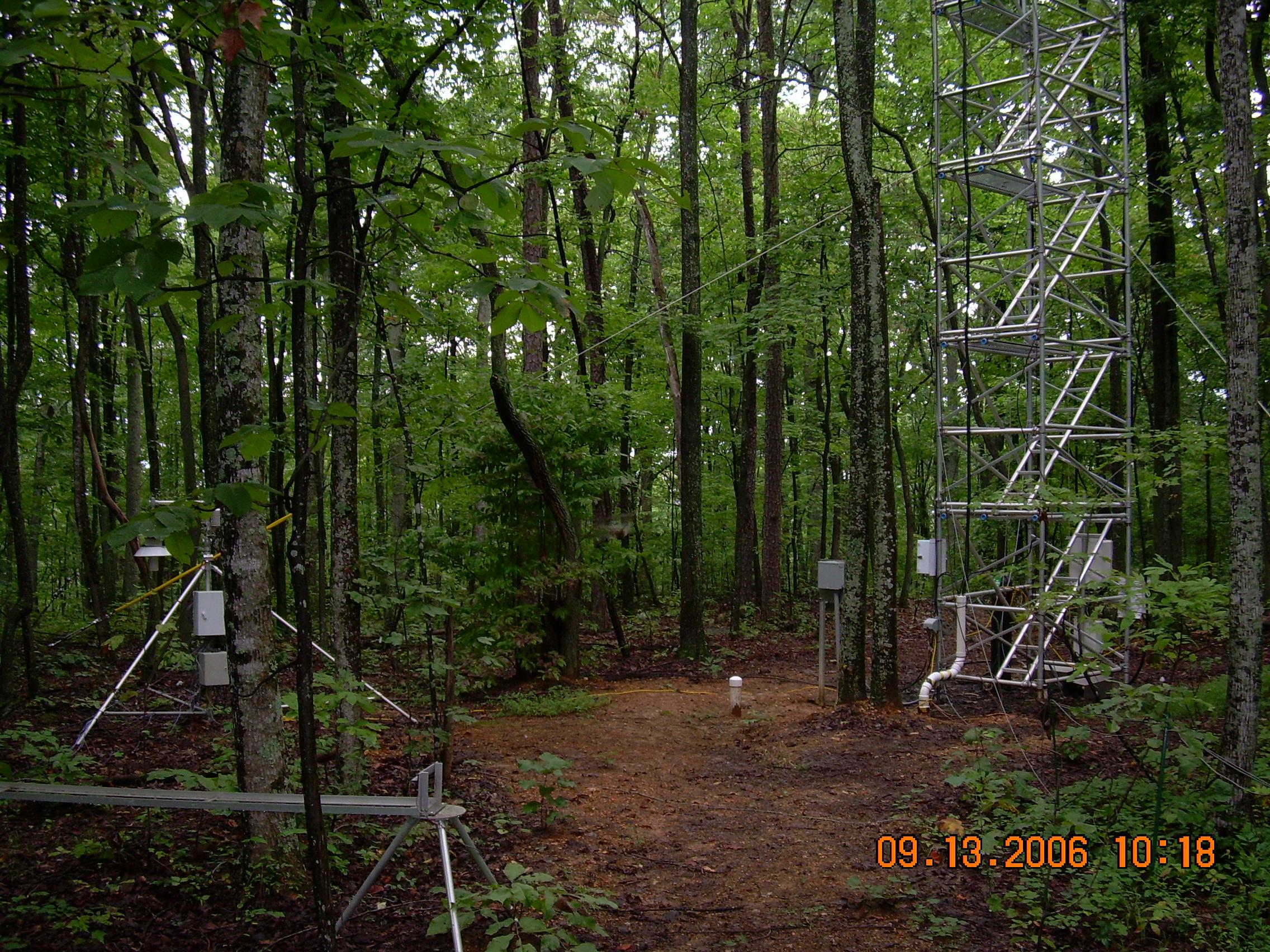 Photo of Chestnut Ridge at ground level