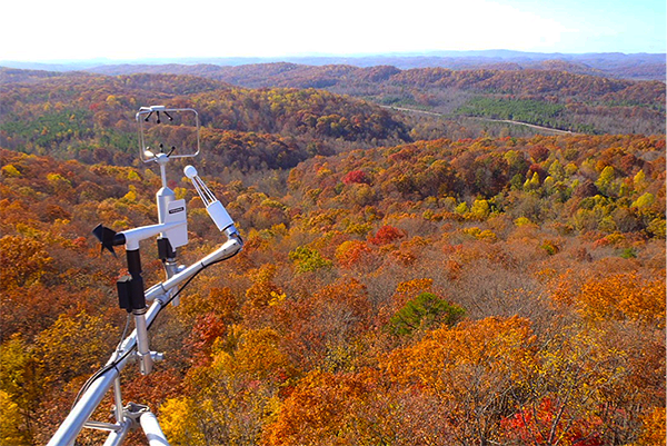 View of Chestnut Ridge from top of tower in Fall